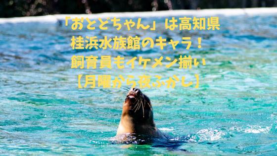 桂浜水族館 イケメン